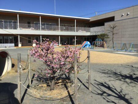 午後の幼稚園